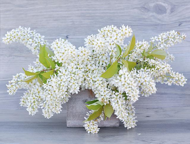 Lilac, Flowers, White, Flowering Twig, Lilac Branches