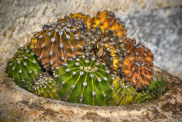 Cactus, Plant, Green, Garden, Flowerpot, Thorny