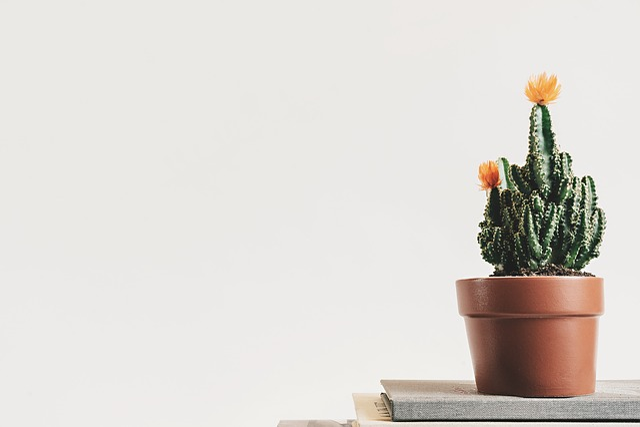 Cactus, Green, Plant, Flowerpot, Interior