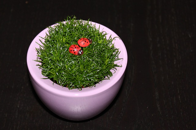 Grass, Ladybug, Flowerpot, Black Background