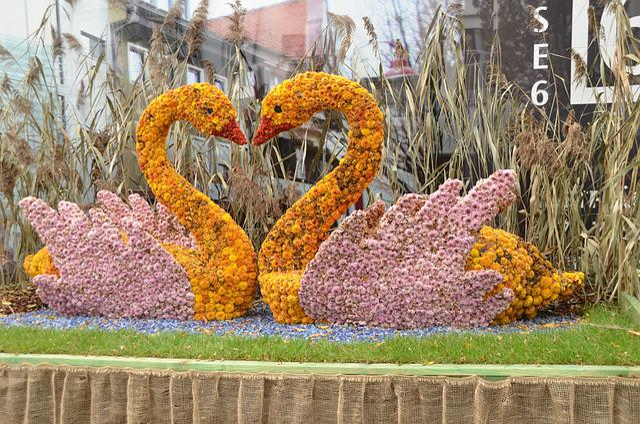 Lahr, Chrysanthema, Flowers, Art, Old Town, Street Art