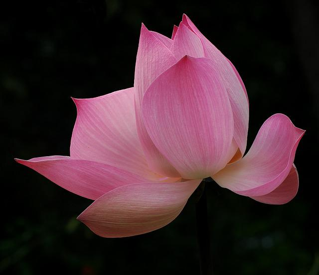 Blossom, Bloom, Hall, Flowers, Beautiful, Thailand