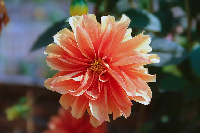 Flowers, Beautiful, Nature, Macro