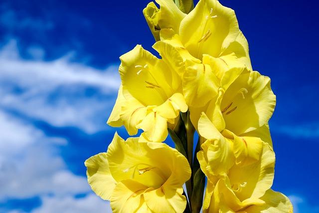 Gladiolus, Flower, Blossom, Bloom, Flowers, Bright