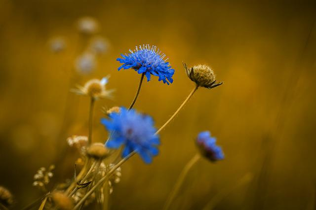 Flower, Pointed Flower, Blue, Blue Flower, Flowers