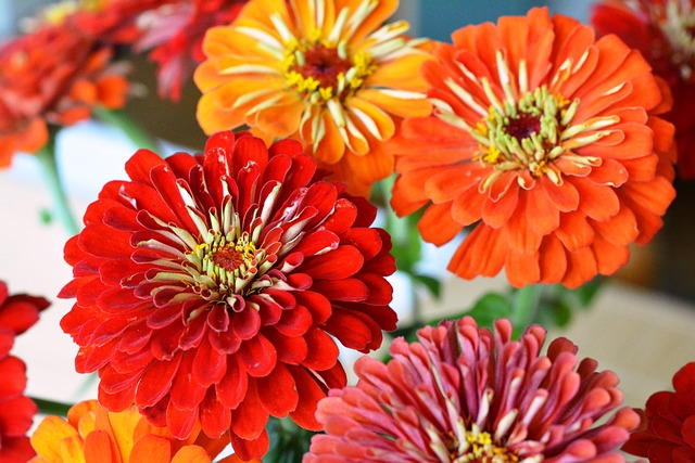 Tin, Zinnia, Red, Flowers, Bouquet, Orange