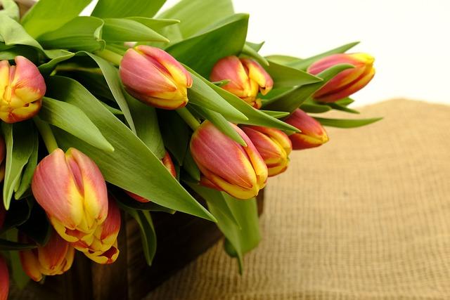 Bouquet, Tulip Bouquet, Tulips, Flowers, Spring