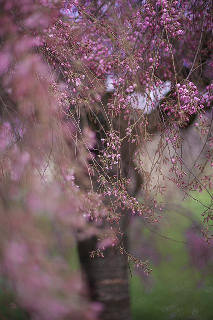 Flowers, Tree, Rosa, Branch, Plant, Color, Nature