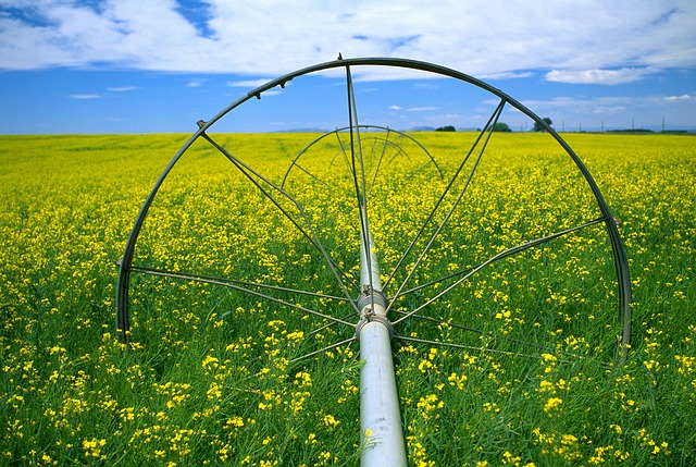 Canola, Field, Flowers, Yellow, Watering, Sky, Scenic