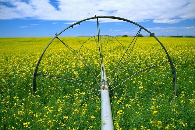 Canola, Field, Flowers, Yellow, Watering, Sky, Scenic
