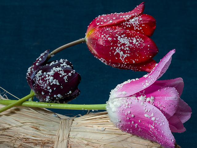 Tulips, Composition, Flowers, Still Life, Ceramic Beads