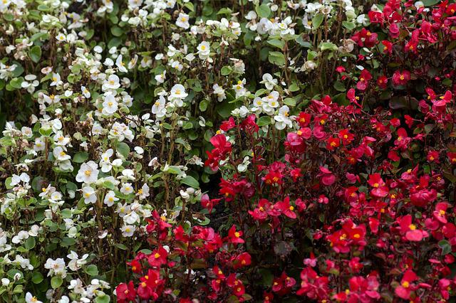 Flowers, White, Red, Close, Flower Discounts
