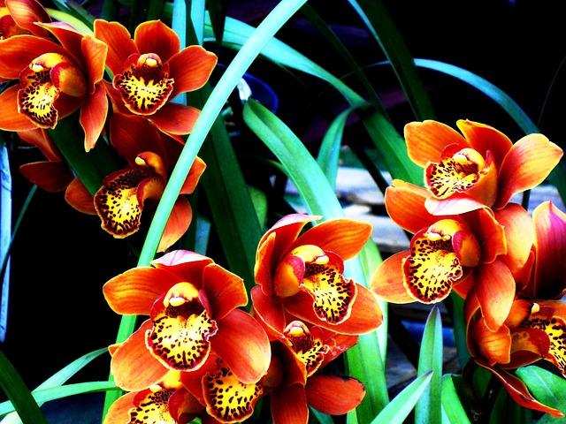 Flower, Orchid, Colombian, Garden, Flowers, Colombia
