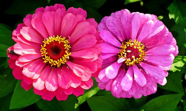 Flowers, Tin, Colorful, Summer, Nature, Garden, Closeup