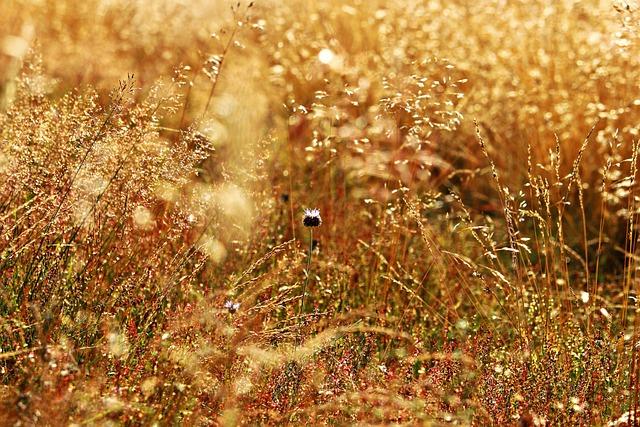 Grass, Forest Grass, Meadow, Cornflower, Flowers