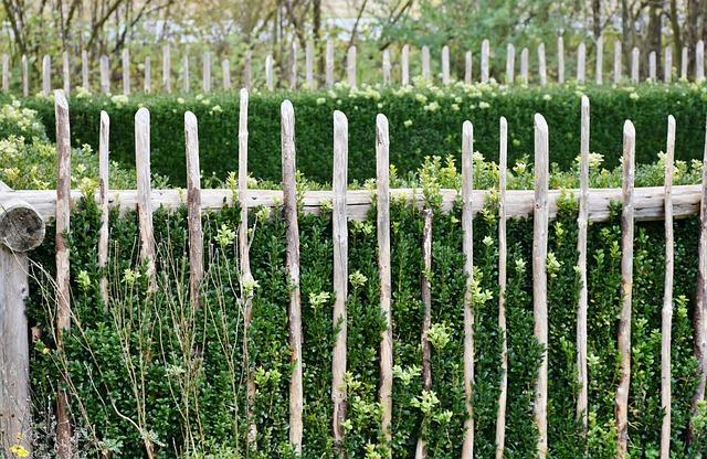 Cottage Garden, Garden, Flowers, Fence, Garden Fence