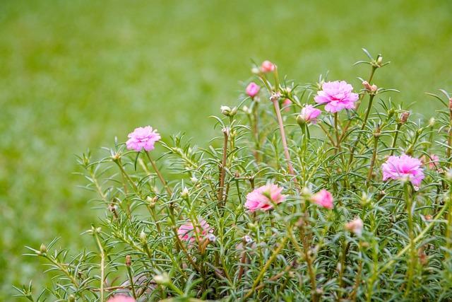 Rose, Crazy Sunshine, Flowers, Crazy Sunny Flower