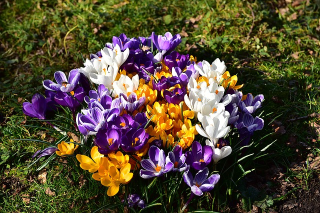 Flowers, Crocus, Flower Petals, Yellow, Color, Blossom