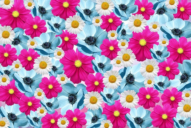 Flowers, Nature, Pink, Light Blue, Romantic, Daisy