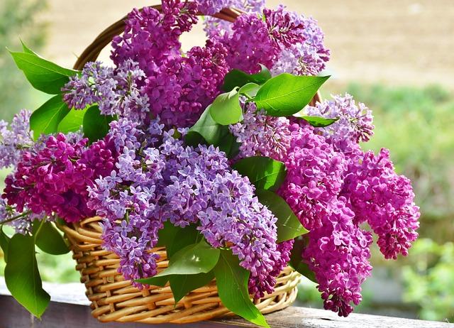 Lilac, Flower Basket, Flowers, Plant, Nature, Floral