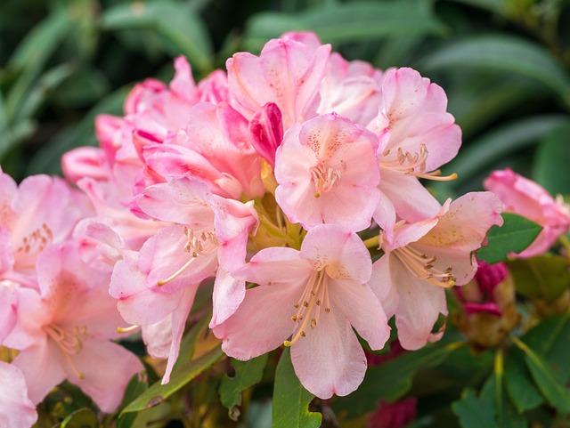 Flower, Flowers, Garden, Spring