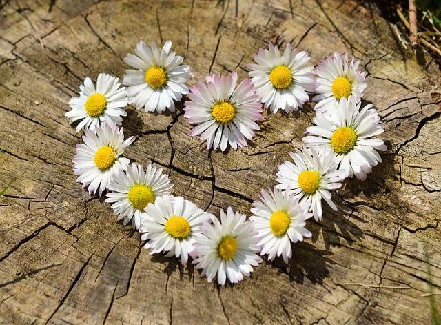 Daisy, Heart, Flowers, Flower Heart, Spring