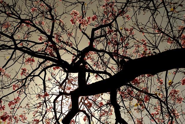 Tree, Flower, Nature, Spring, Garden, Flowers