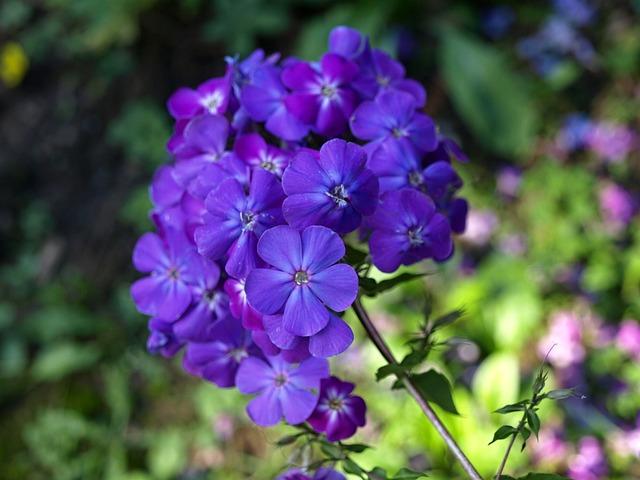 Flowers, Garden, Plant