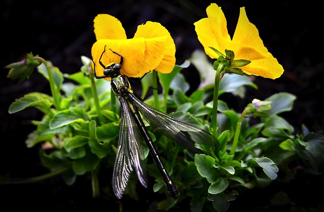 Dragonfly, Wings, Flowers, Plant, Garden