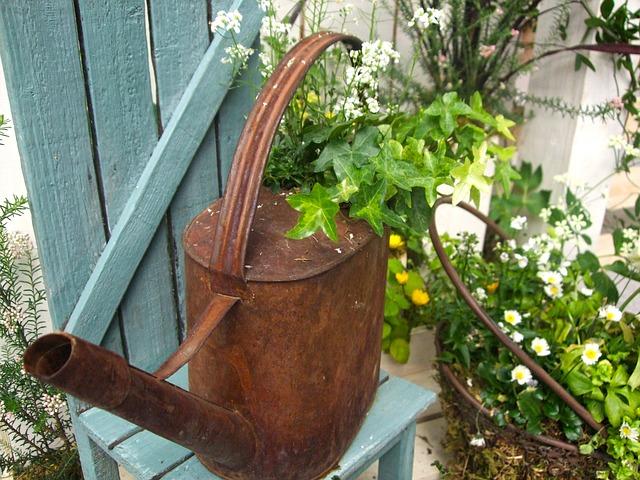 Gardening, Plant, Garden, Flowers, Watering Can