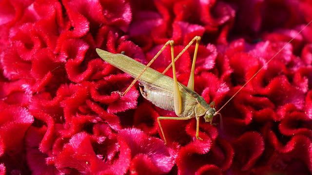 Grasshopper, Insects, Flowers, Flower