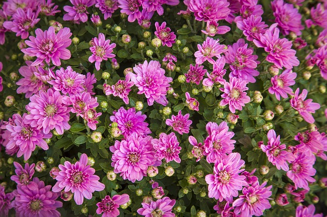 Flowers, Magenta, Color, Green, Pink, Plants, Beauty