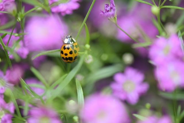 Ladybug, Flowers, Insect, Nature, Beetle, Blossom