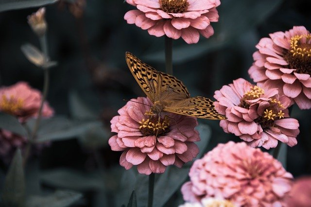 Flowers, Garden, Bloom, Butterfly, Insects, Wings