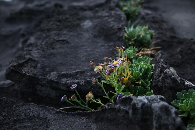 Jeju, Sea, Flowers, Jeju Island, Travel, Korea
