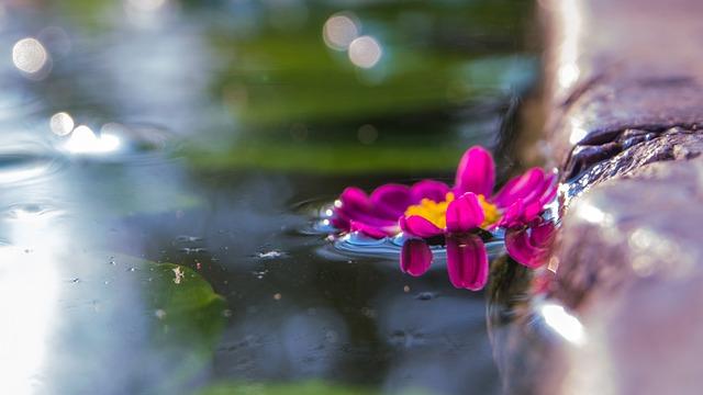 Flowers, Pool, Macro