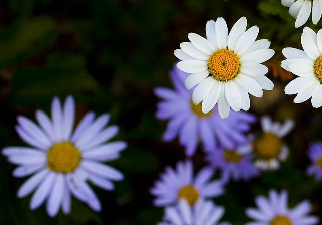 Gujeolcho, Flowers, Plants, Autumn, Nature
