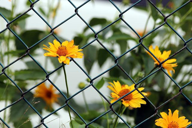 Flowers, Nature, Plant, Summer, Outdoors, Fence, Net