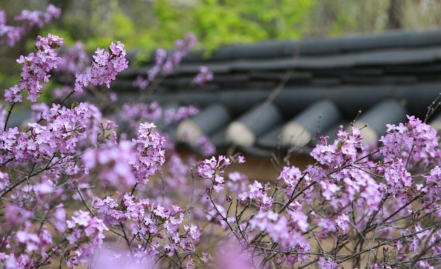 Noel Online Gift Shop, Lilac, Flowers, Plants, Nature