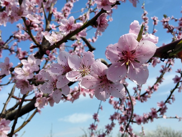 Flowers, Spring, Nature, Garden, Macro, Beauty