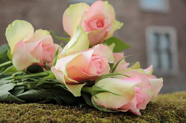 Roses, Noble Roses, Flowers, Pink, Pink Roses