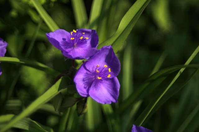 Often Delivered With, Irises, Flowers, Purple