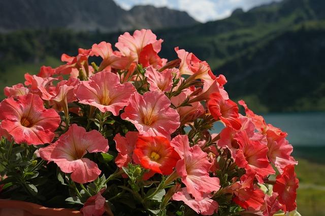 Petunia, Flowers, Orange, Nachtschattengewächs