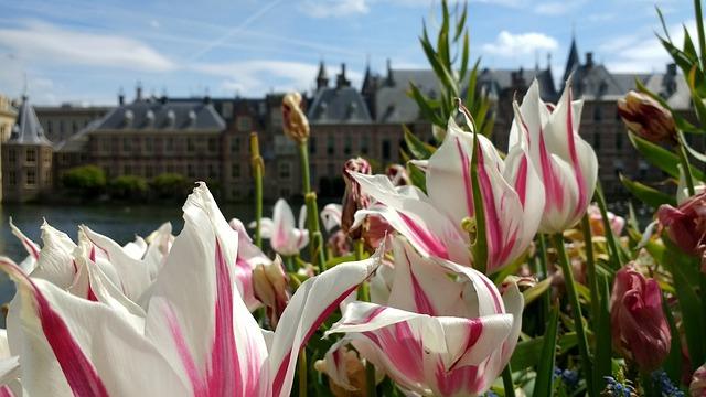 Binnenhof, Flowers, Den Haag, Netherlands, Parliament