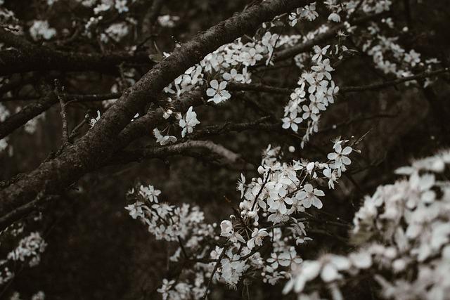 Pattern, Moody, Flowers