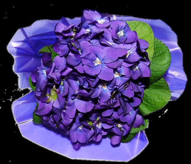 Flowers, Violets, Perfume