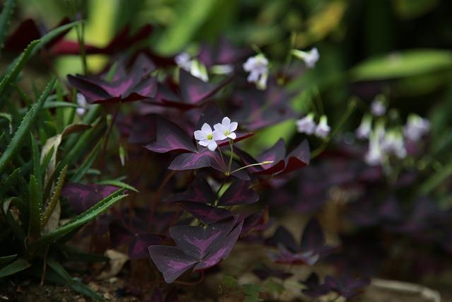 Wildflower, Flowers, Plants, Petal, Nature, Spring