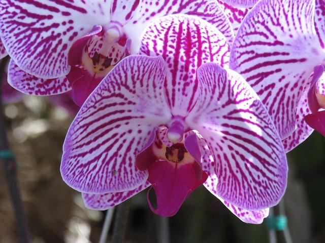 Purple, Flower, Orchid, Flowers, Petals, Nature