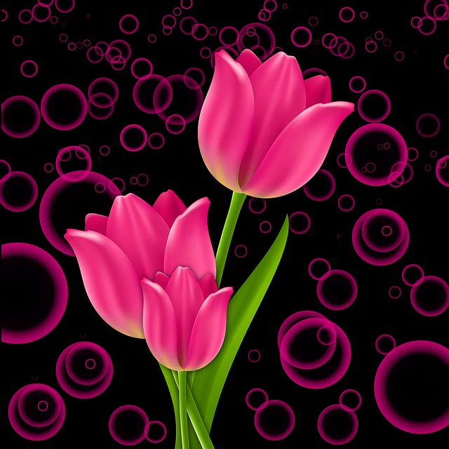 Plant, Flowers, Flower, Tulip, Tulips, Pink, Background