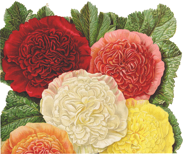 Flowers, Yellow, Pink, Orange, Red, Bouquet, Plant